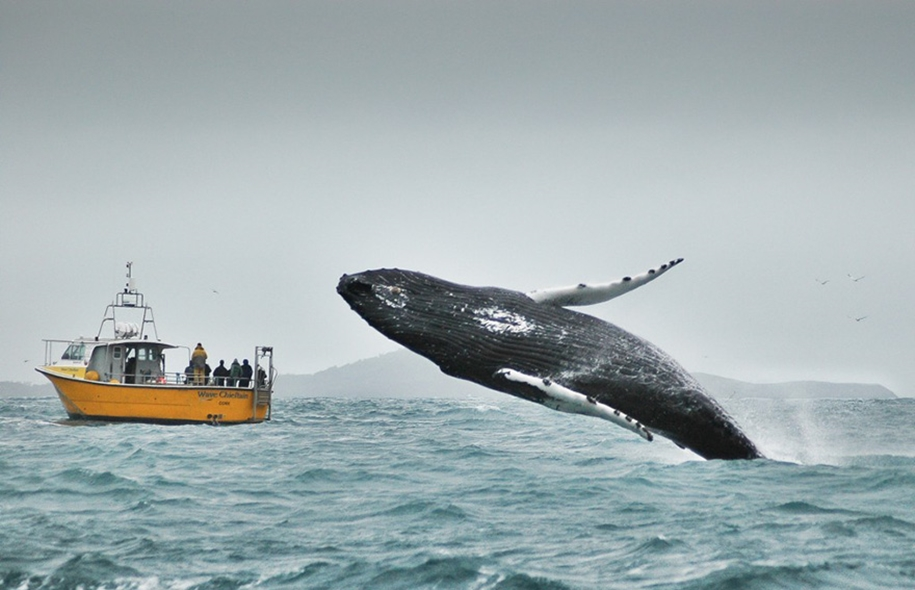 Majestic photos of whales 21