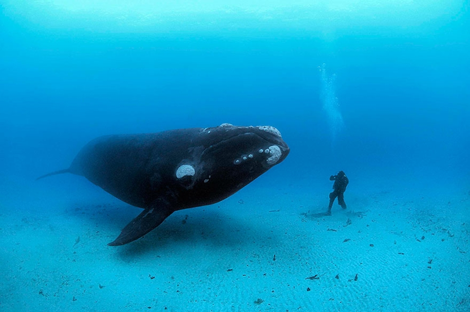 Majestic photos of whales 25