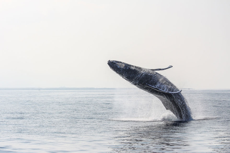 Majestic photos of whales 26