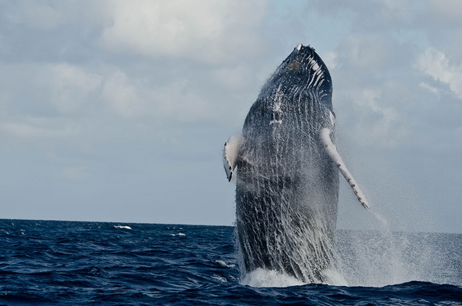 Majestic photos of whales 29