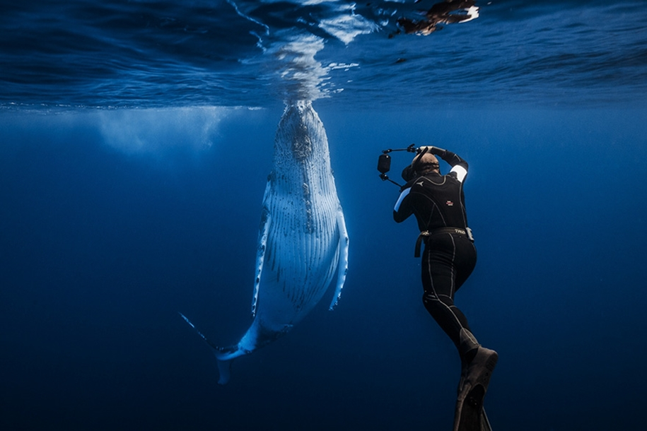 Majestic photos of whales 32