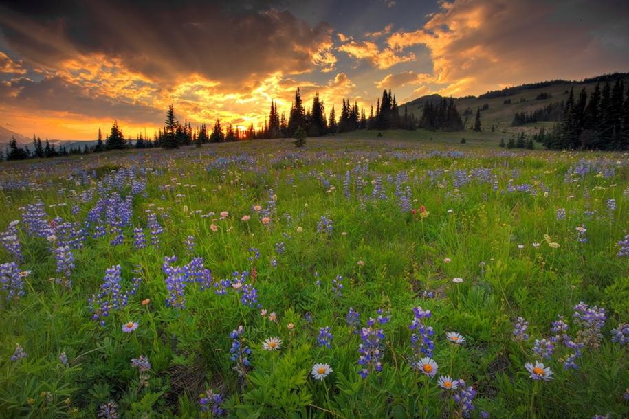 Mount_Rainier_National_Park_10