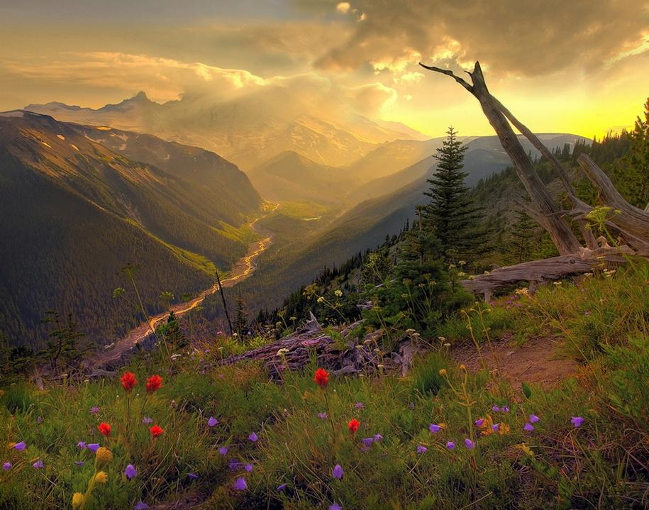 Mount_Rainier_National_Park_3