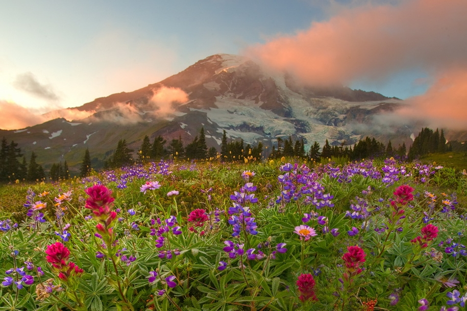 Mount_Rainier_National_Park_7