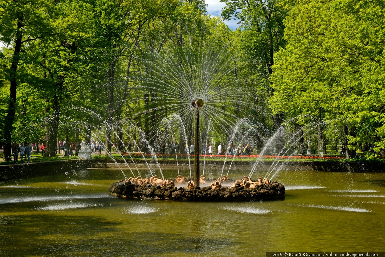 Peterhof. Little water. Many colors 21