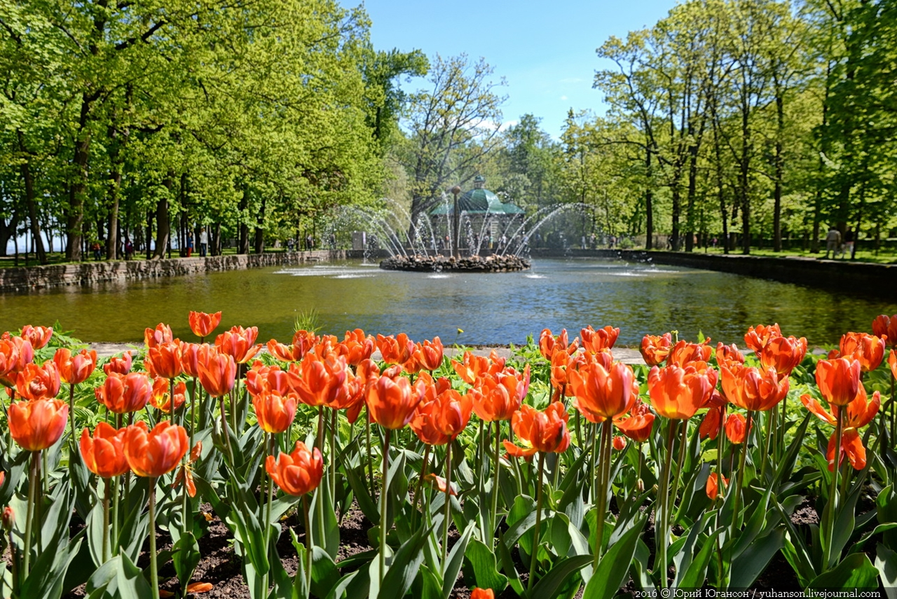 Peterhof. Little water. Many colors 24