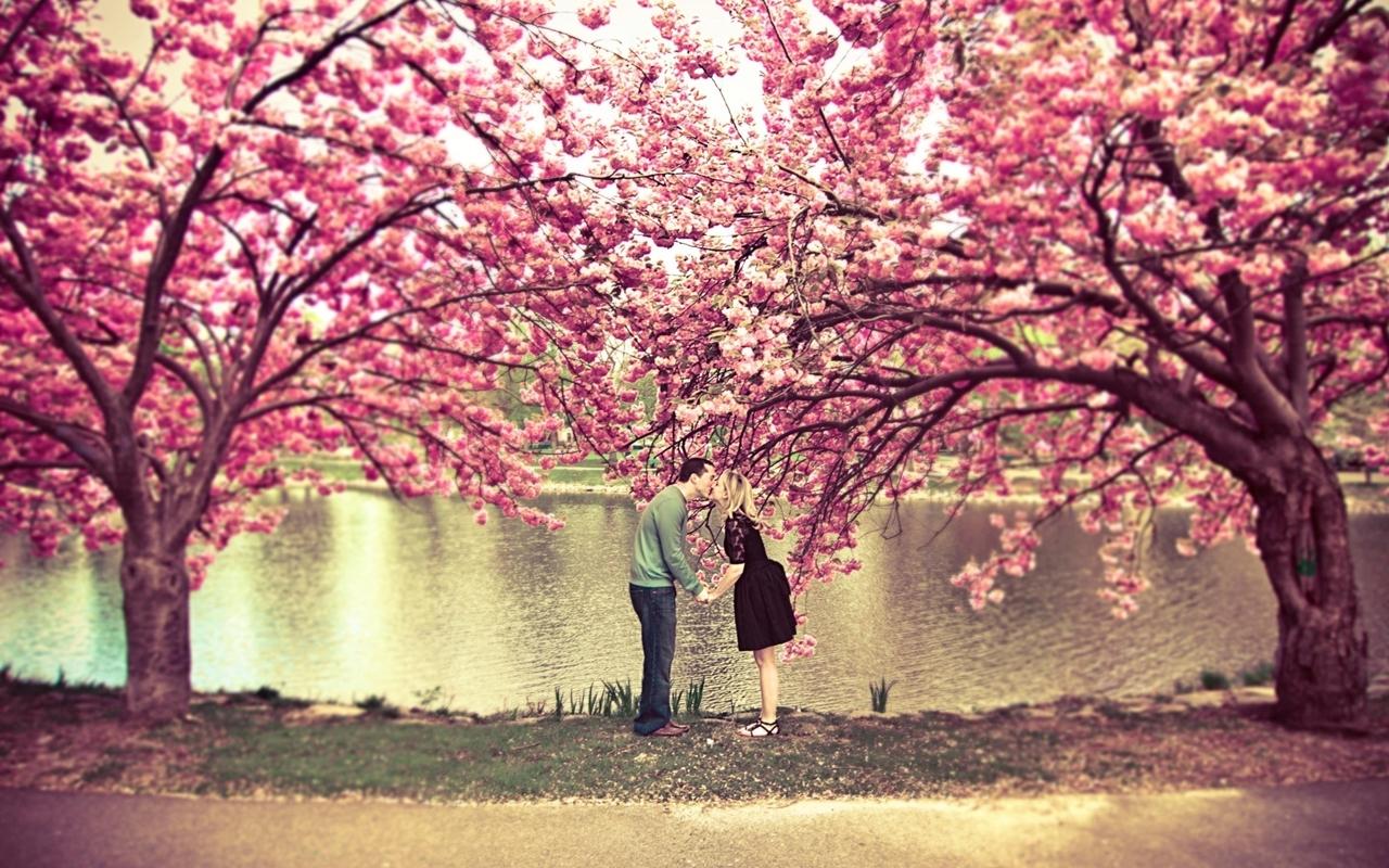 Photos of Sakura 04