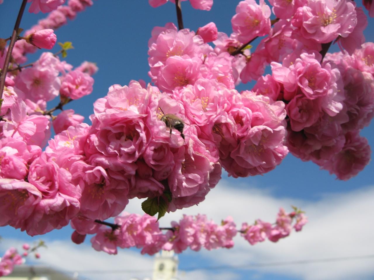 Photos of Sakura 05
