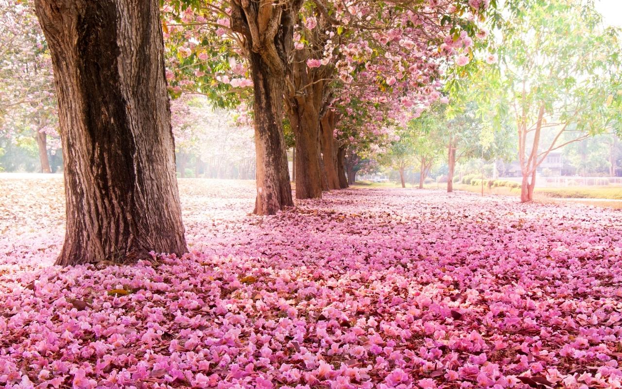 Photos of Sakura 06