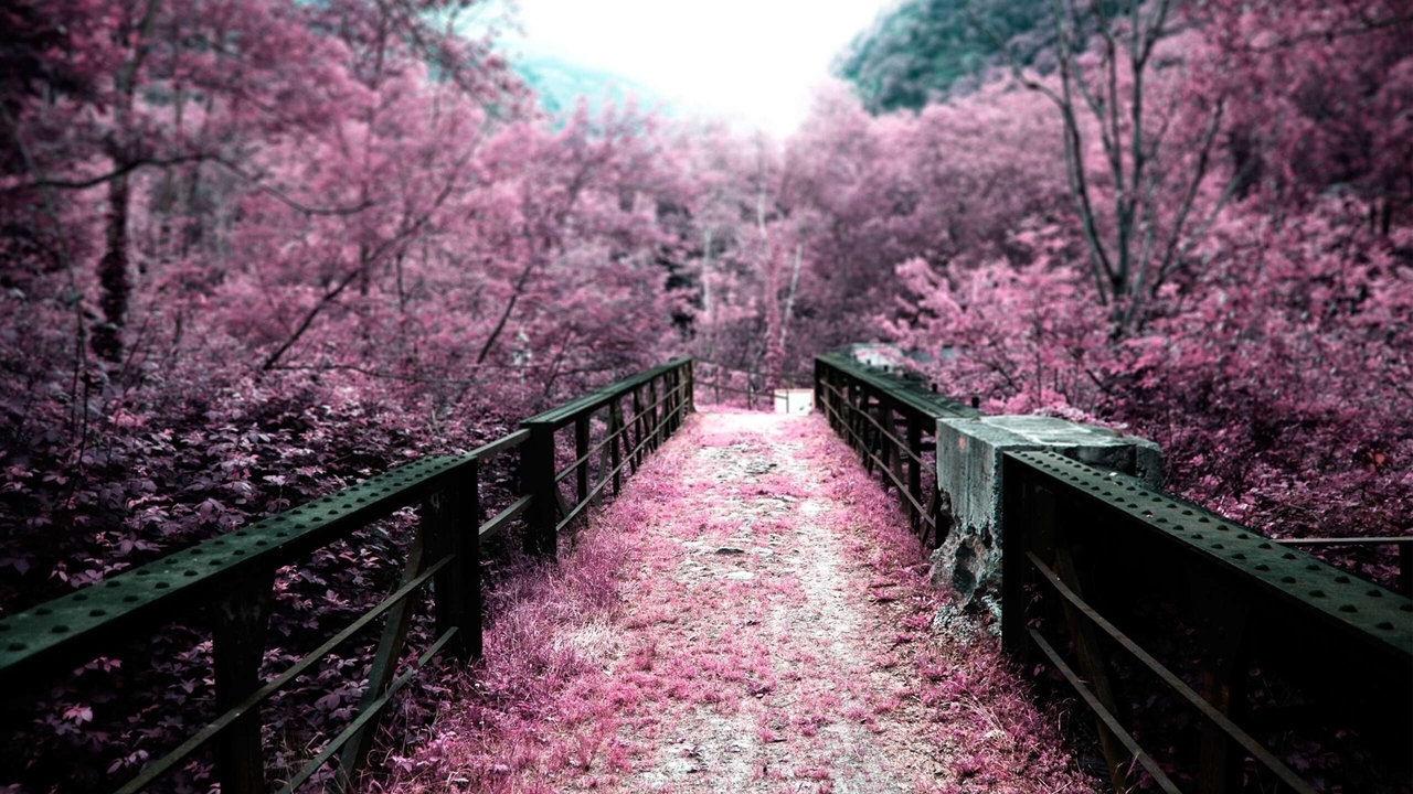 Photos of Sakura 07