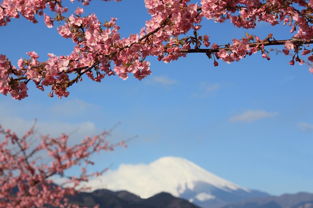 Photos of Sakura 08