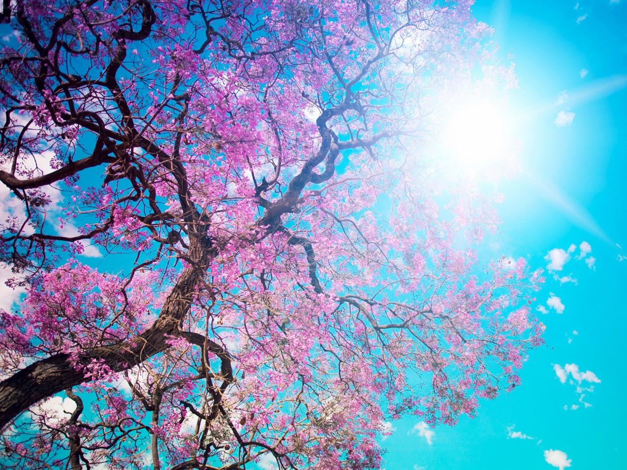 Photos of Sakura 09
