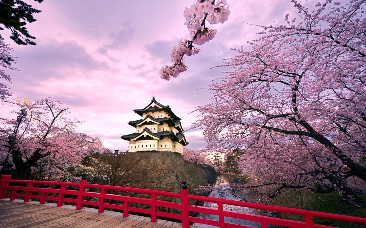 Photos of Sakura 10