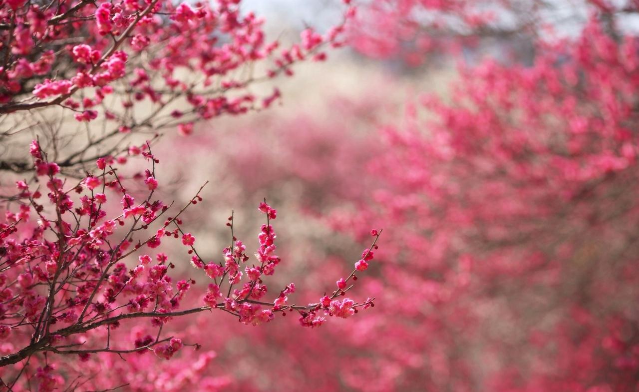 Photos of Sakura 13
