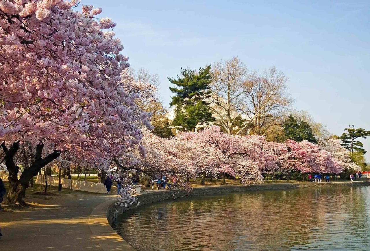 Photos of Sakura 15