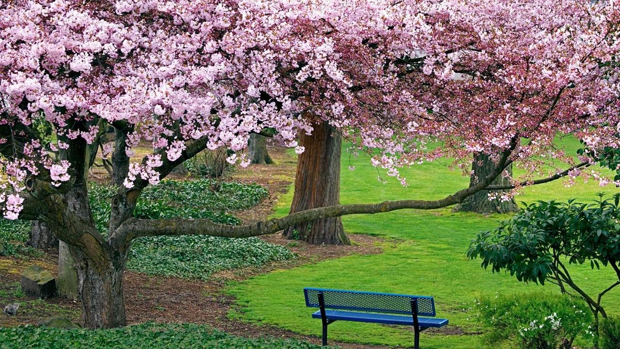 Photos of Sakura 16