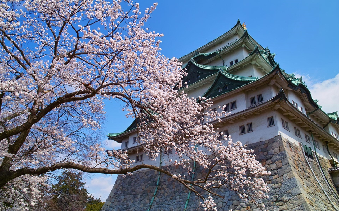 Photos of Sakura 18