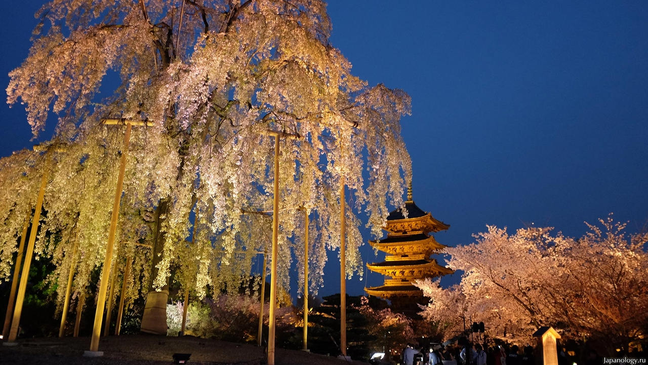 Photos of Sakura 19