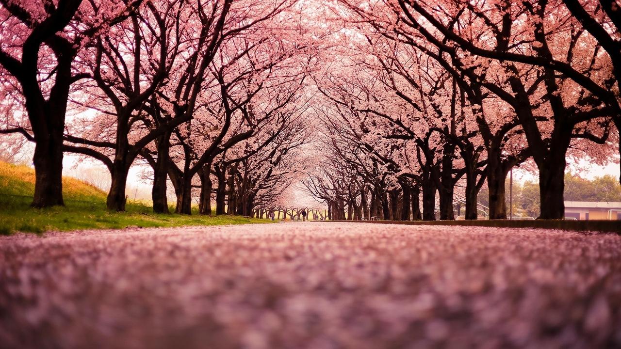 Photos of Sakura 25