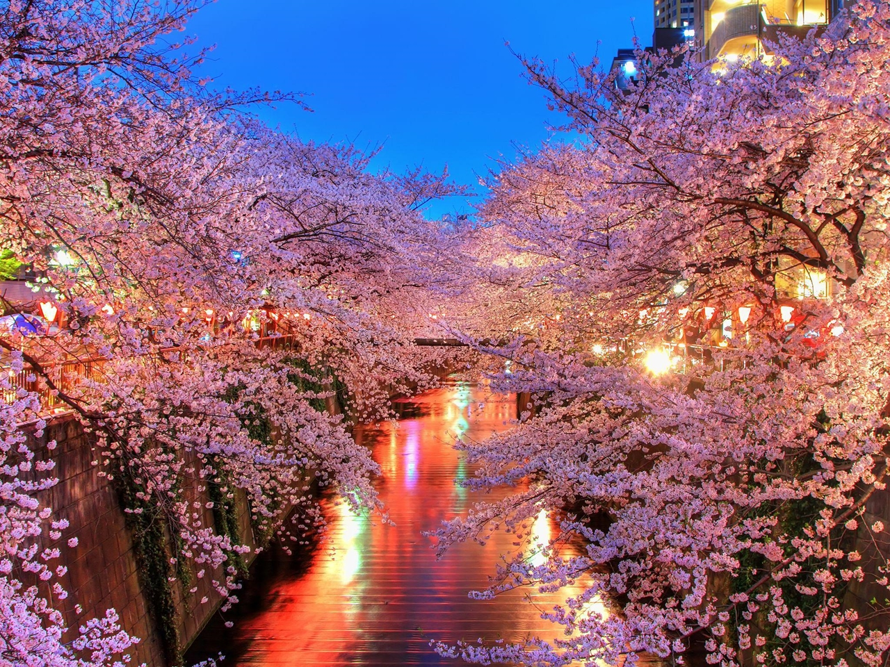 Photos of Sakura 26