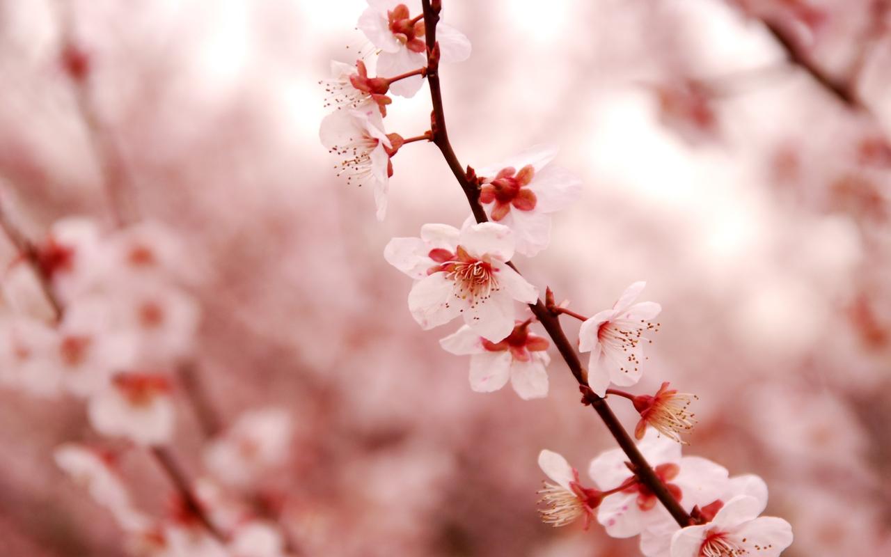 Photos of Sakura 28