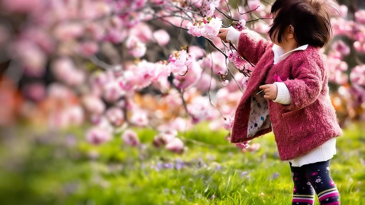 Photos of Sakura 30