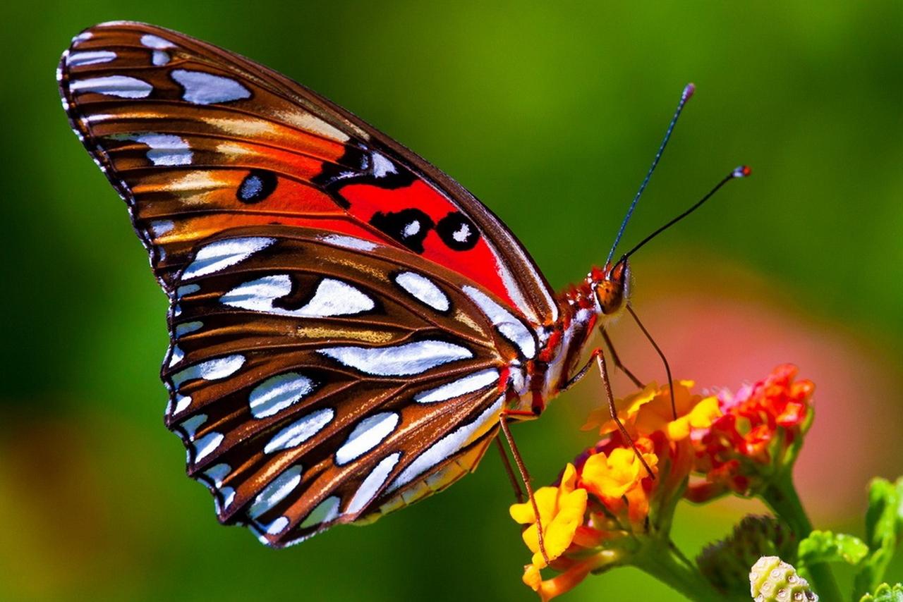 Фотографии бабочек