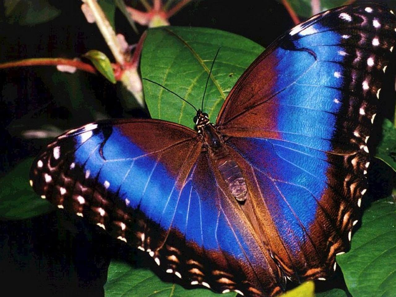 Pictures of butterflies 02