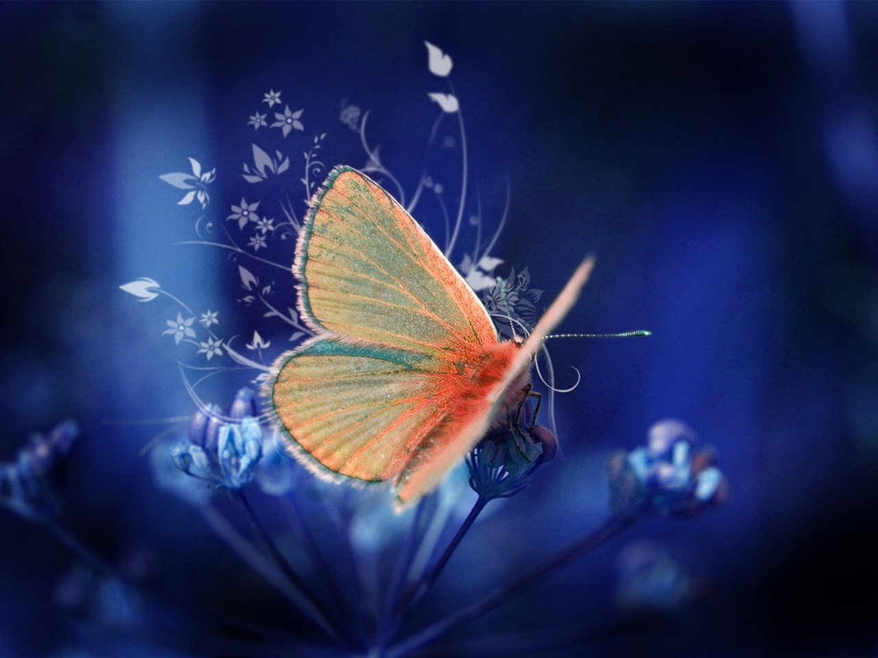 Pictures of butterflies 03