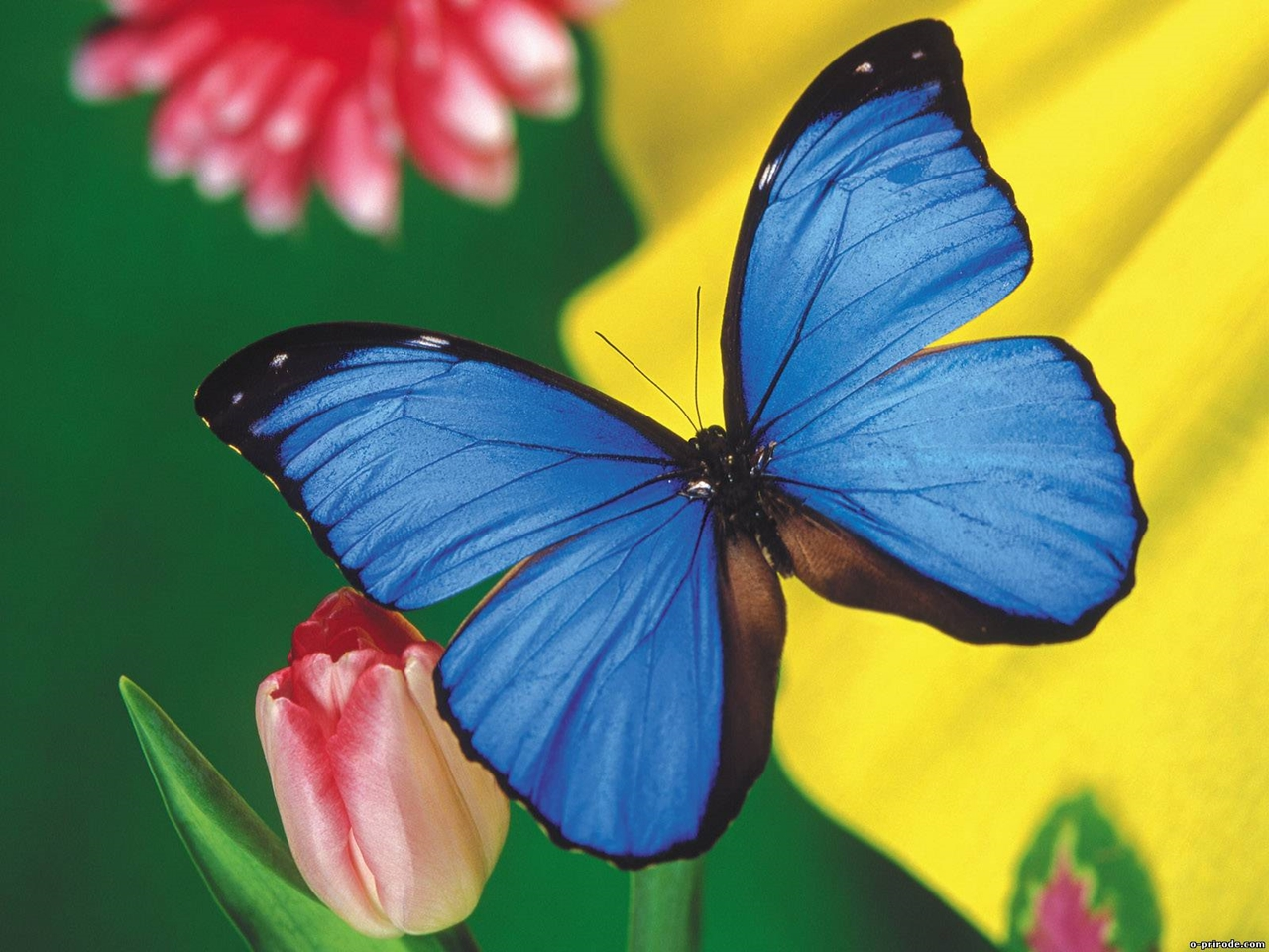 Pictures of butterflies 04