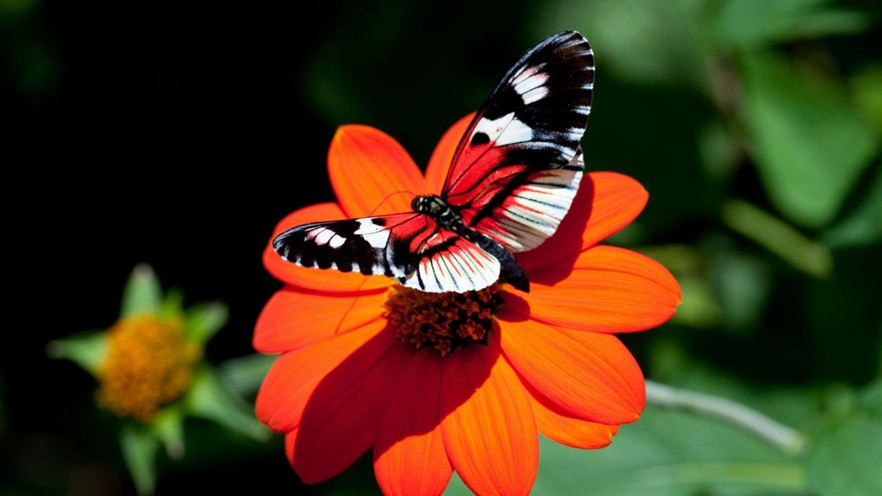 Pictures of butterflies 05