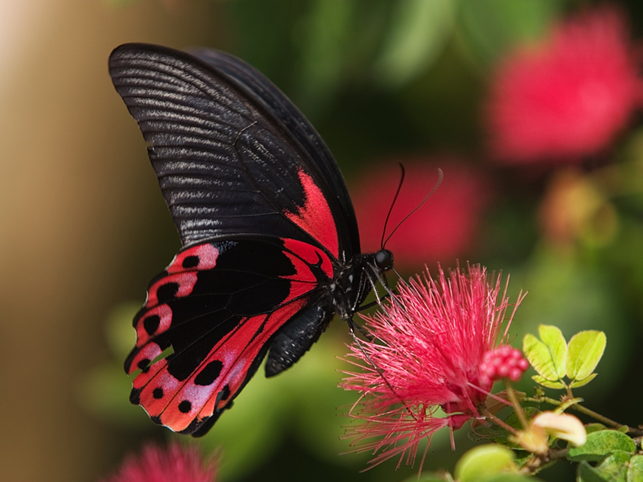 Pictures of butterflies 06