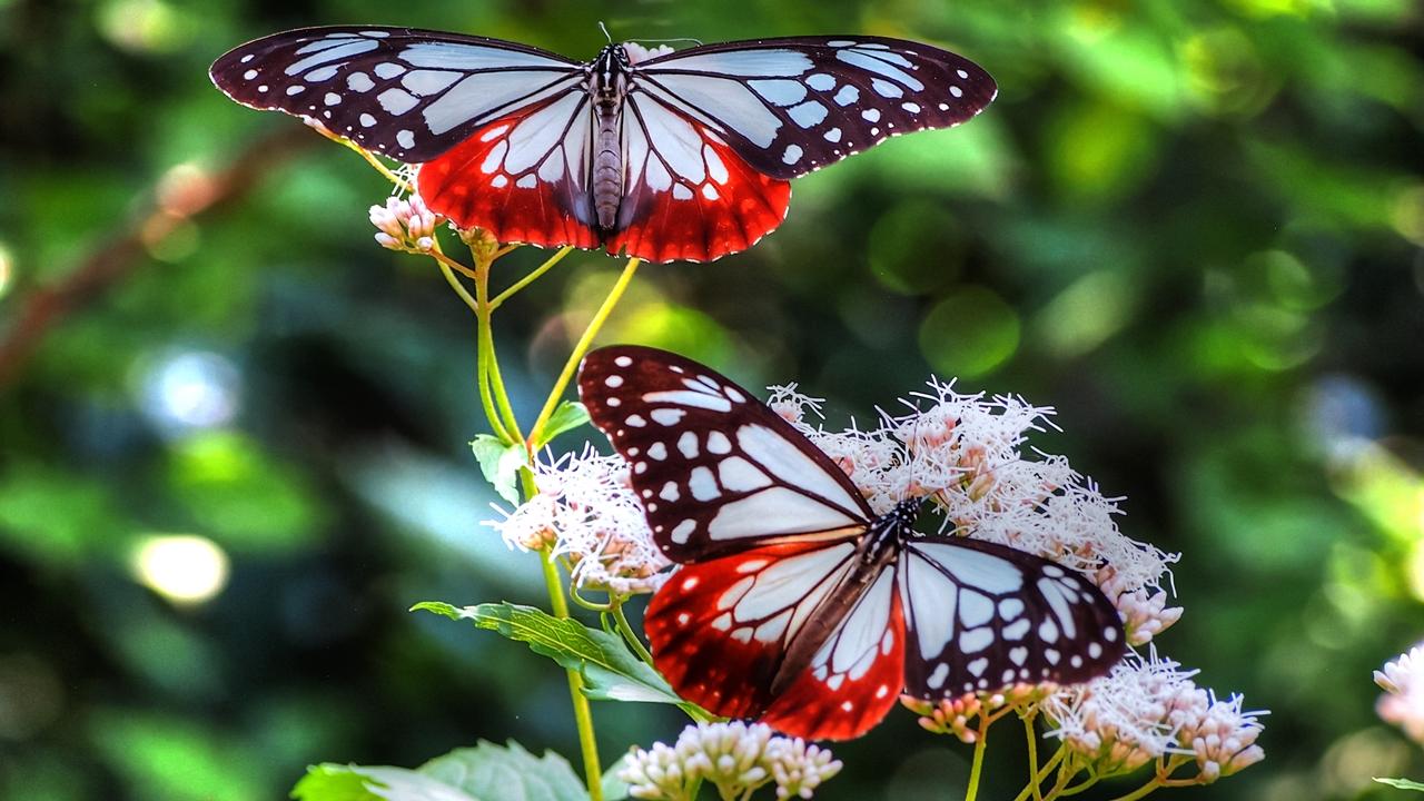 Pictures of butterflies 07