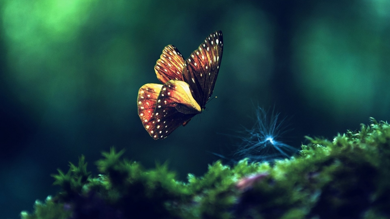 Pictures of butterflies 08