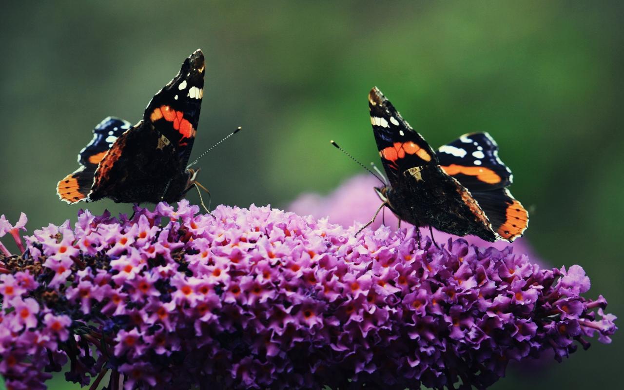 Pictures of butterflies 09