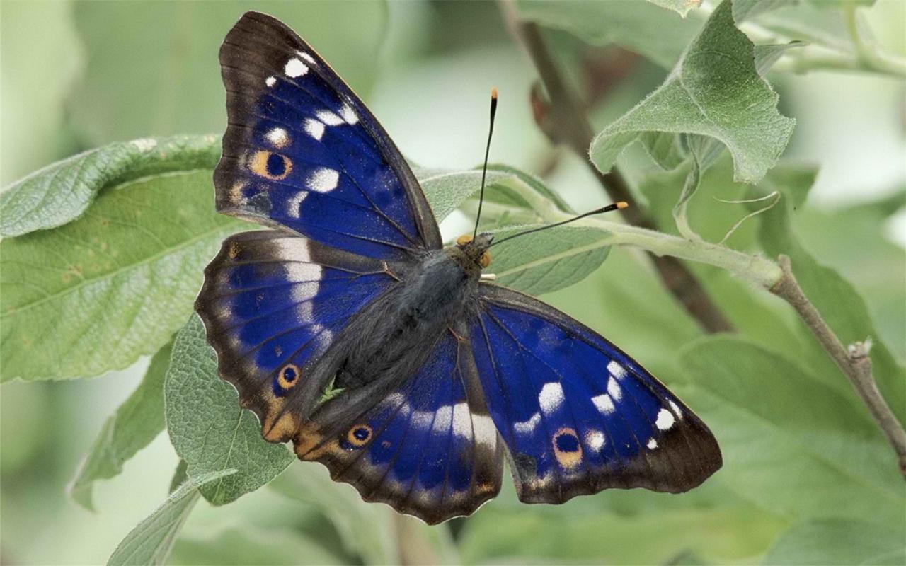 Pictures of butterflies 11