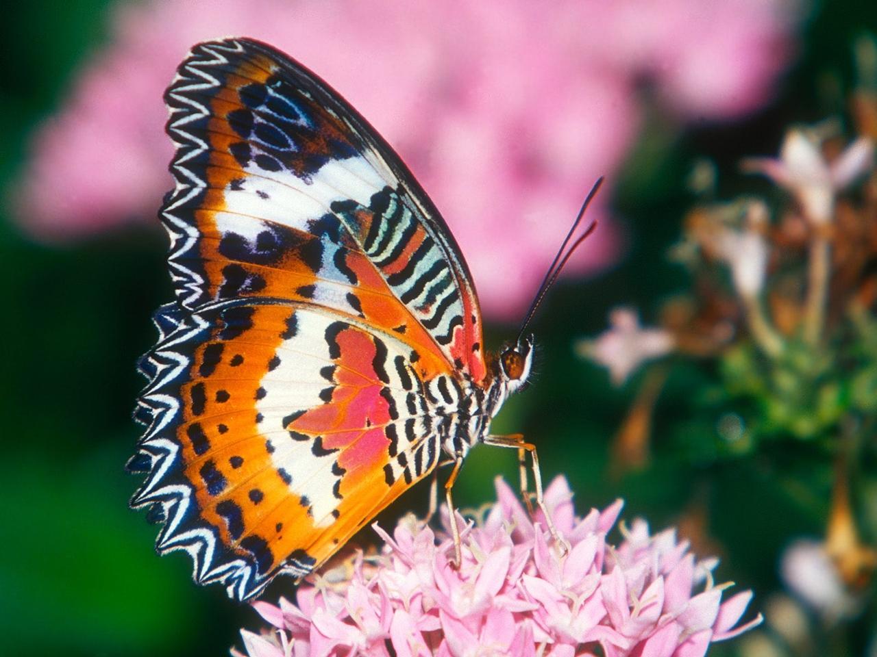 Pictures of butterflies 12