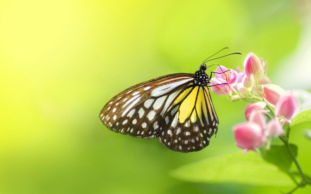 Pictures of butterflies 13