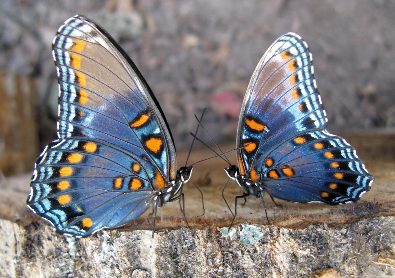 Pictures of butterflies 14