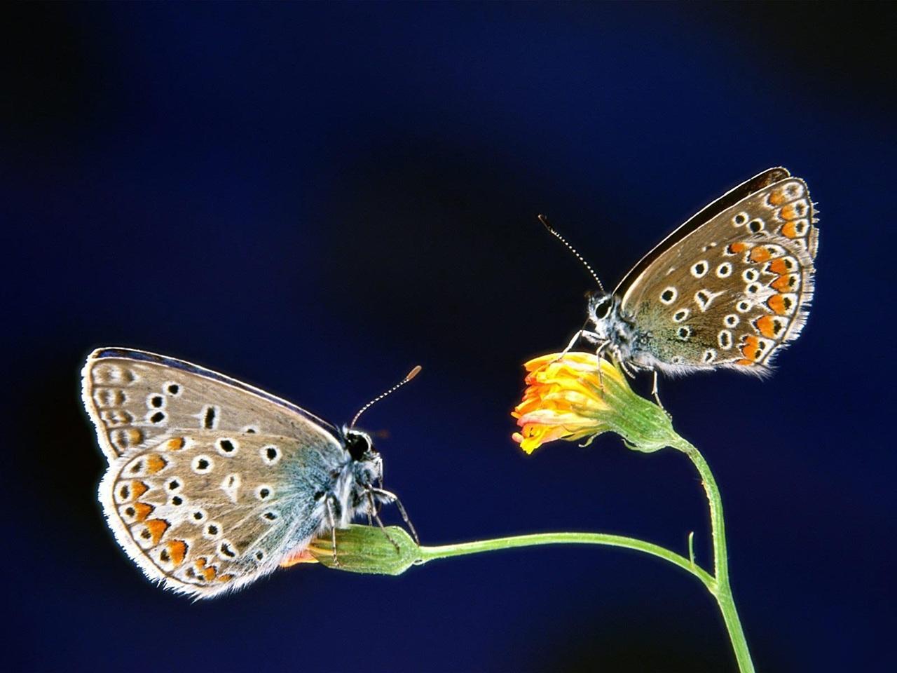 Pictures of butterflies 15