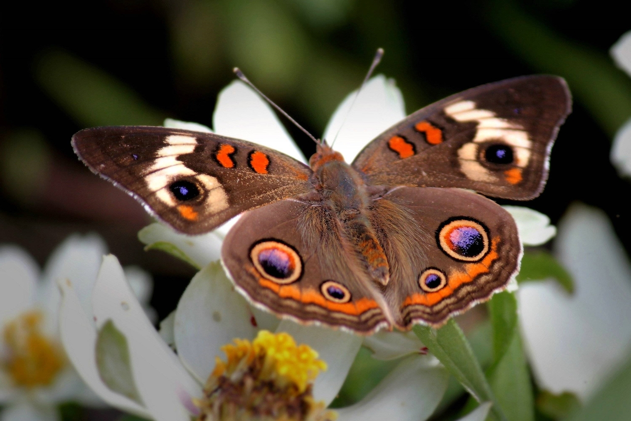 Pictures of butterflies 16
