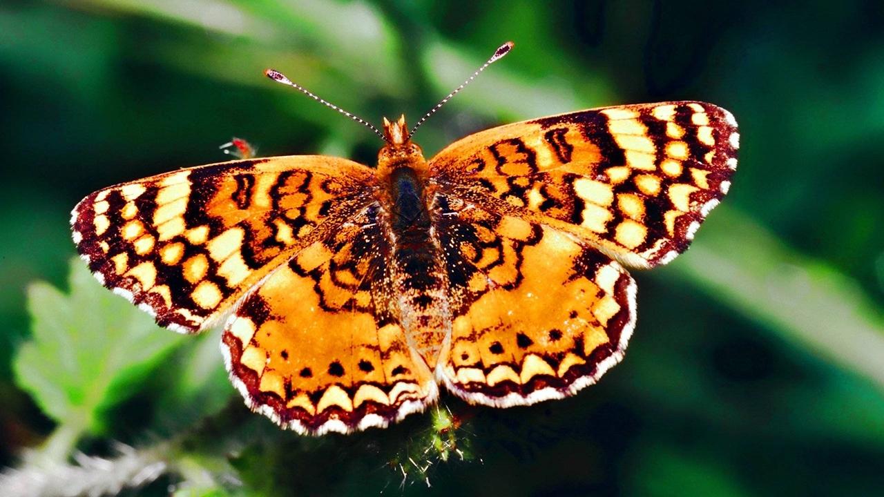 Pictures of butterflies 17