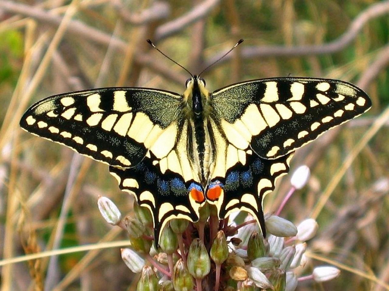 Pictures of butterflies 18