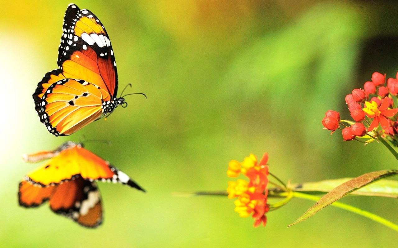 Pictures of butterflies 20