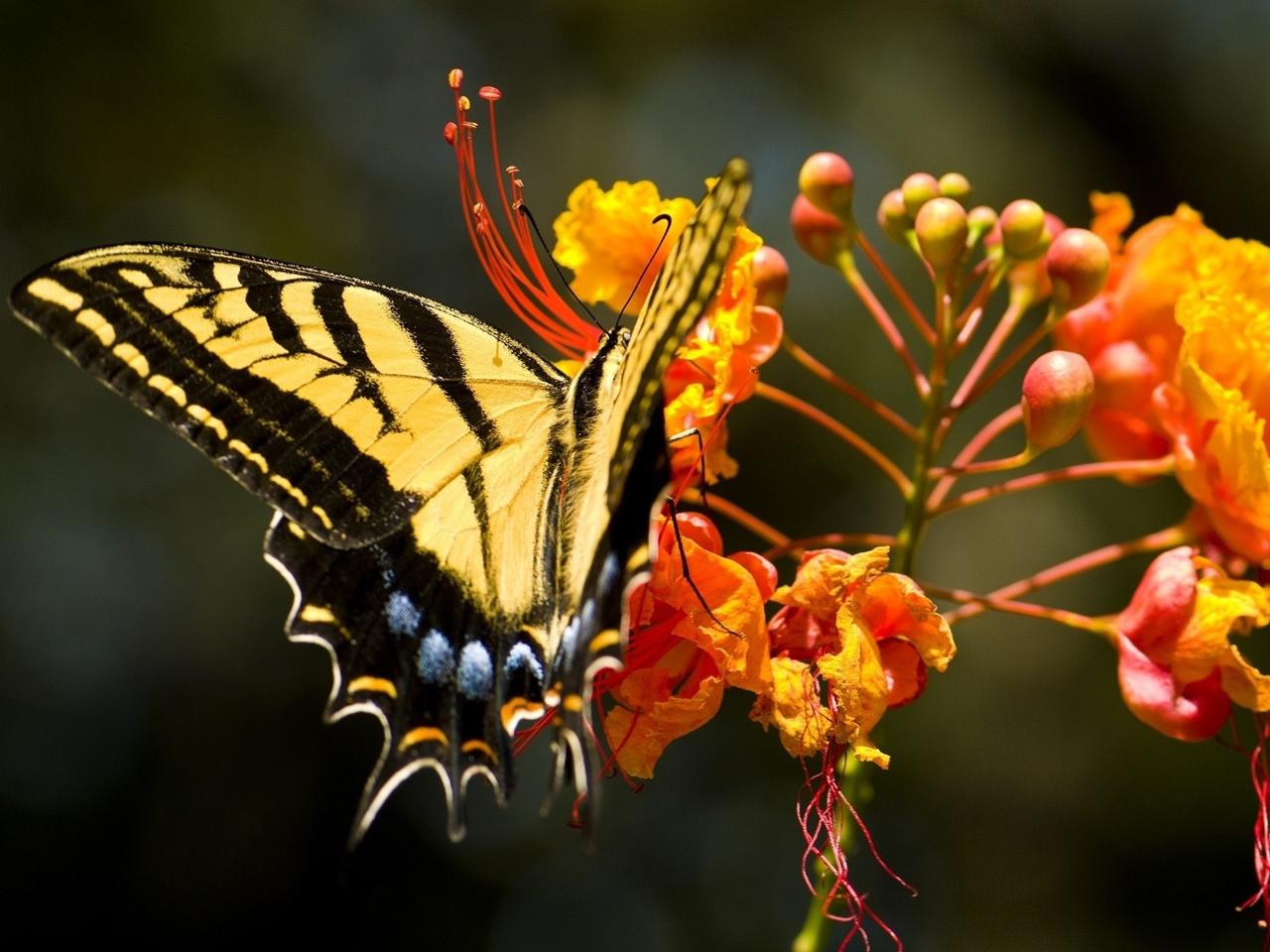 Pictures of butterflies 21