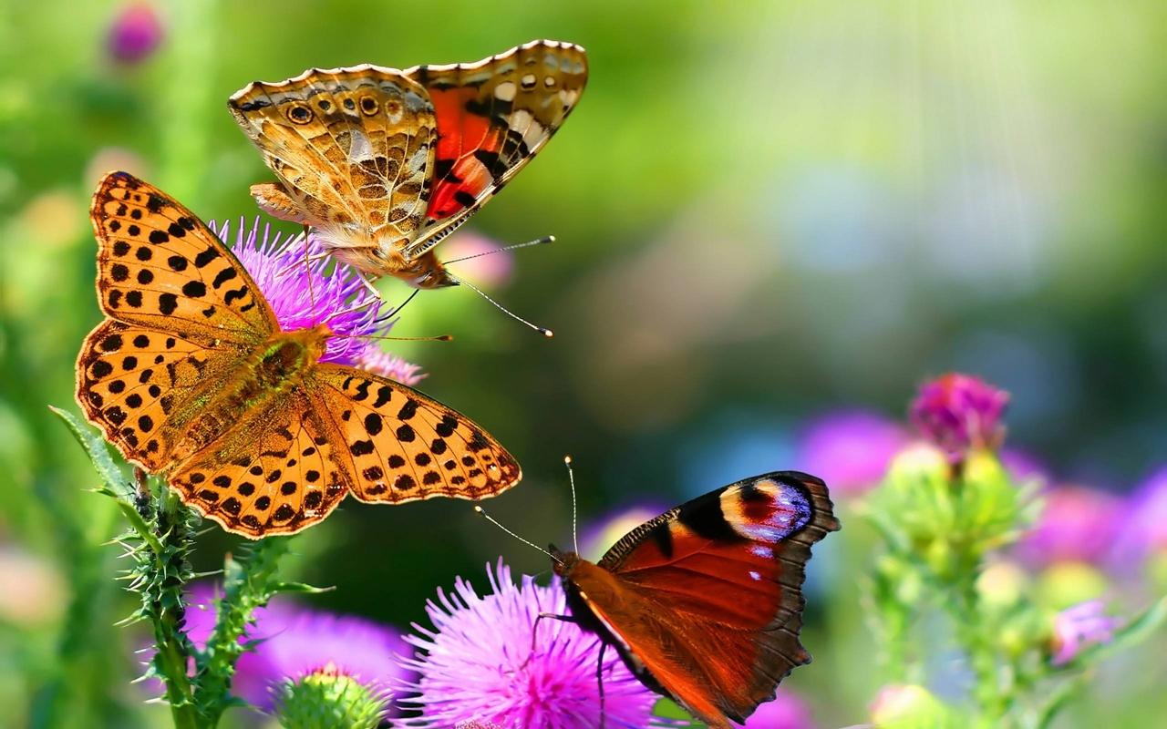 Pictures of butterflies 22