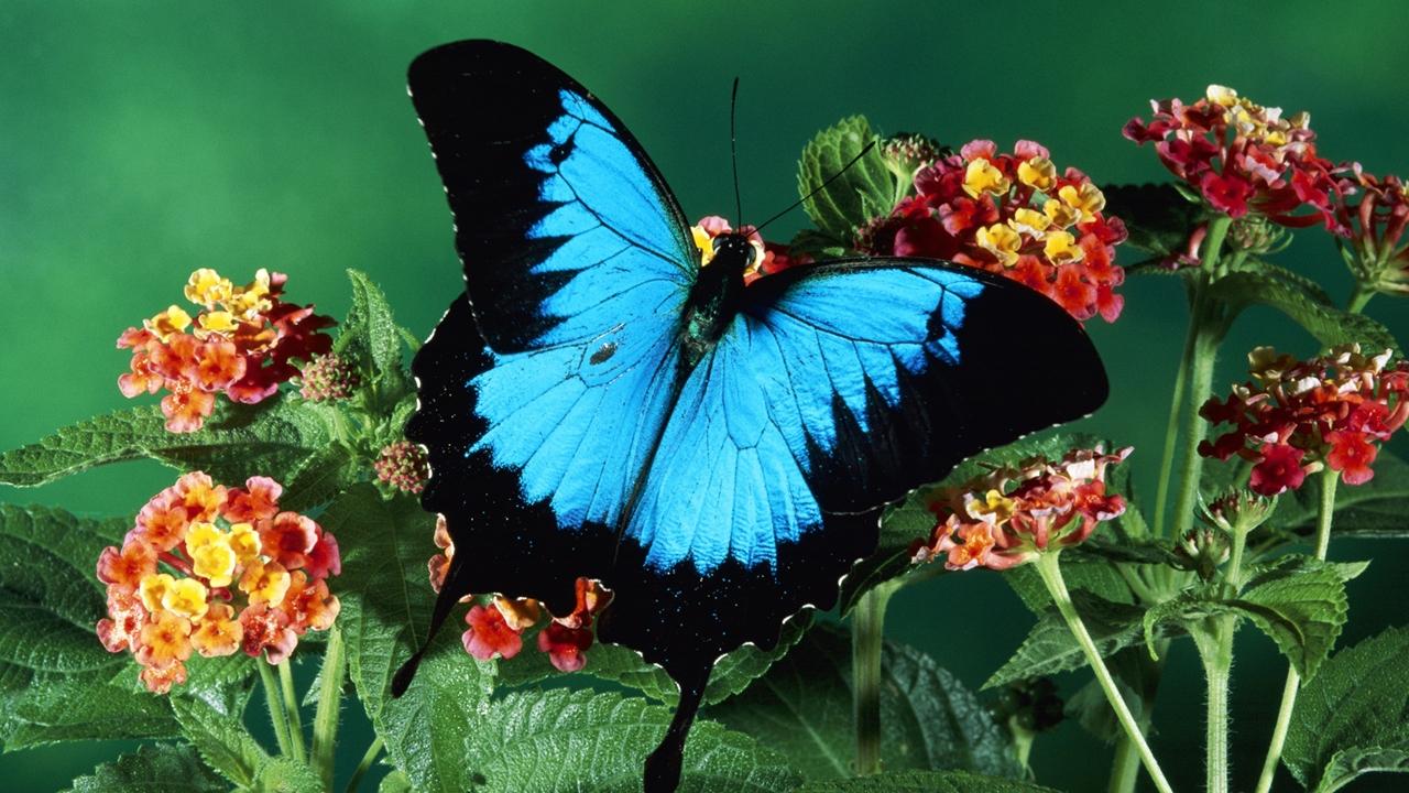 Pictures of butterflies 23