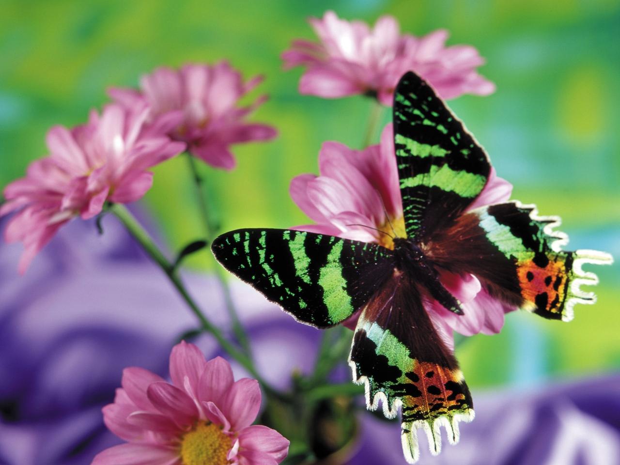 Pictures of butterflies 24