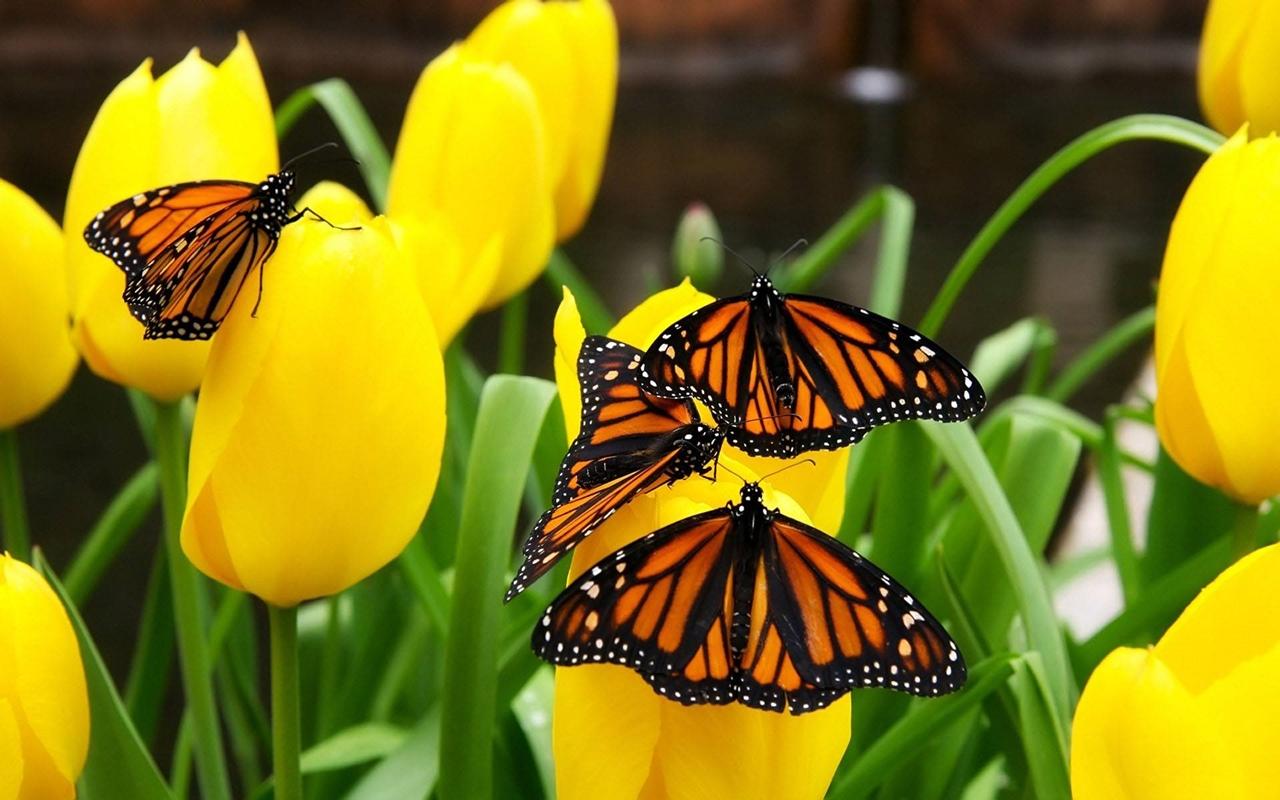 Pictures of butterflies 25