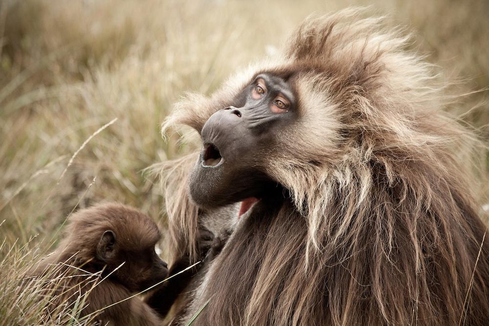 Приматы Гелада